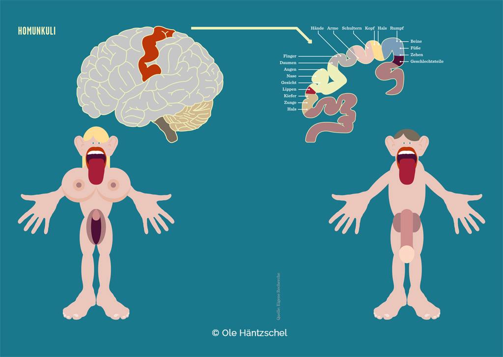 Homunkulus und Homunkuline